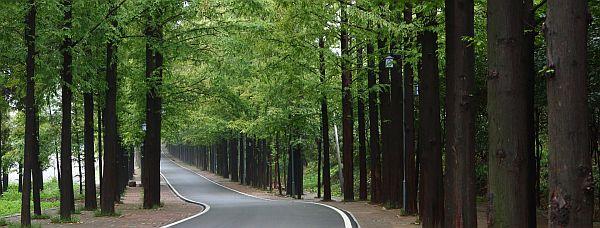 泌阳铜山风景区国森林公园