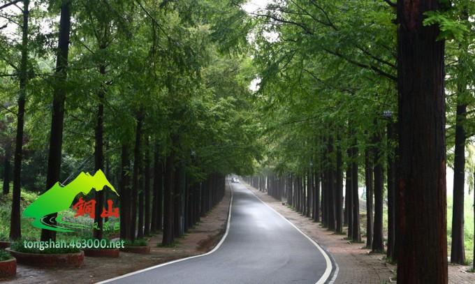 铜山湖国家森林公园